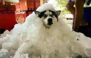狗狗中暑如何诊断?狗狗中暑的防治方法